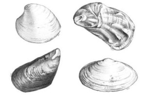 shellfish_multi